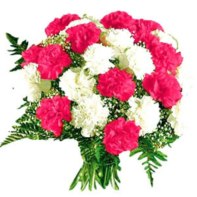 12 Red & White Carnations Bunch