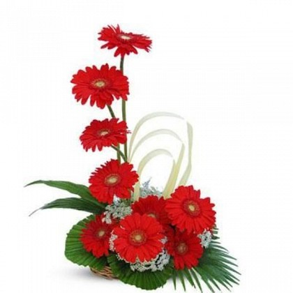 12 Red Gerberas Basket