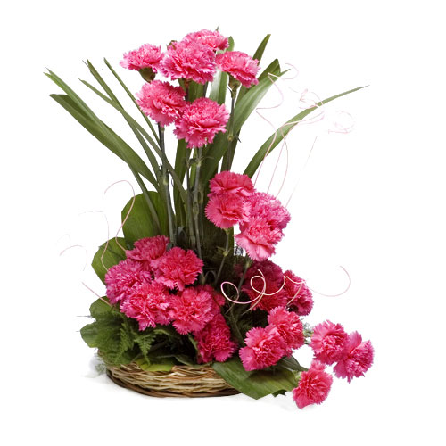 Basket Arrangement of 25 Pink Carnations
