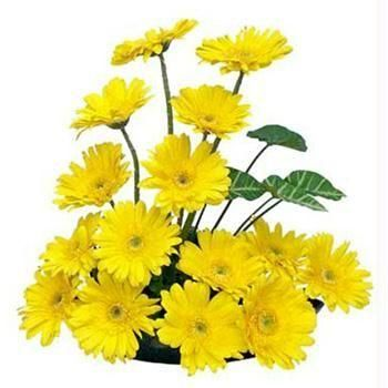 Basket of 15 Natural Yellow Gerberas