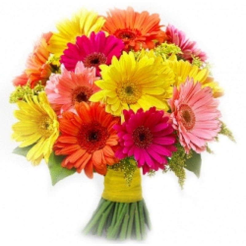 Bunch of 15 Mixed Gerberas