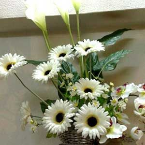 Basket of 12 Fresh White Gerberas
