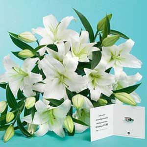 12 White lillies