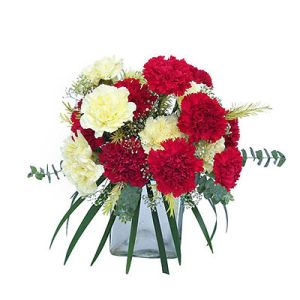 15 Red and white Carnation Flowers