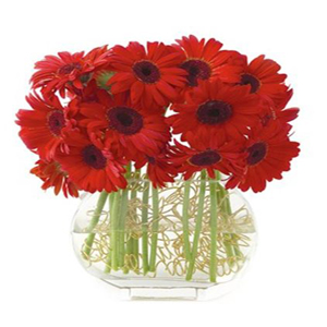 20 Red Gerberas in Glass Vase