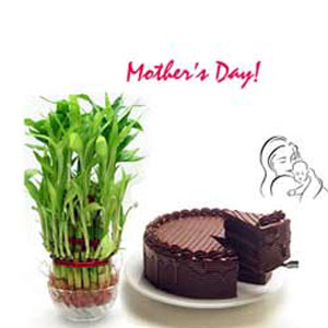 Good Luck Plant with 1/2Kg Chocolate Cake