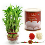 Rakhi with Good Luck Plant n Rasgulla