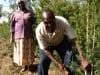 KOOFA farmers Jacinta and Sampson are harvesting their tea tree crop